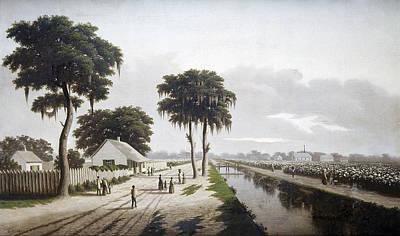 Cotton Fields Painting - Cotton Plantation, C1855 by Granger
