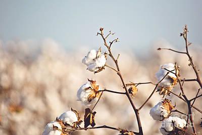 Cotton Production Art Print by Scott Pellegrin