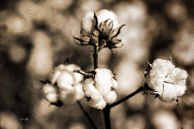 Boll Photograph - Cotton by Scott Pellegrin