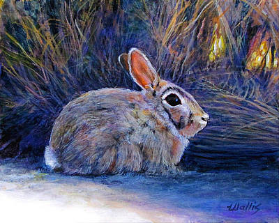 Cottontail In The Shadows Art Print by Charles Wallis