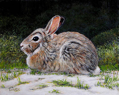 Cottontail Rabbit On The Riverbank Art Print by Charles Wallis