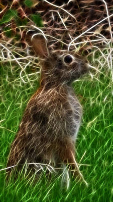 Photograph - Cottontail by Robyn Stacey