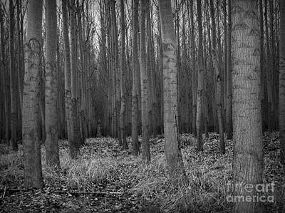 Photograph - Cottonwood Alley by Chalet Roome-Rigdon