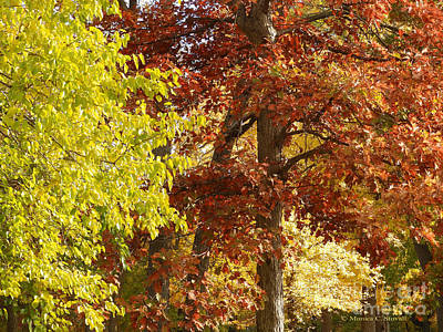 Photograph - Cottonwood And Oak Tree Fall Colors - M Landscapes Fall Collection No. Lf10 by Monica C Stovall