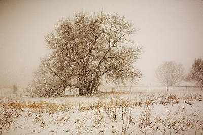 Photograph - Cottonwood And Snow by Marilyn Hunt