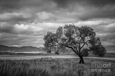 Photograph - Cottonwood And Stormclouds by Alexander Kunz