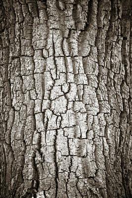 Cottonwood Bark 1 Art Print by Marilyn Hunt