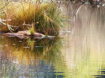 Photograph - Cottonwood Creek by Michele Penner