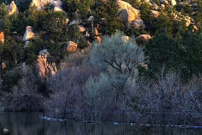 Photograph - Cottonwood Dawn by Wayne King