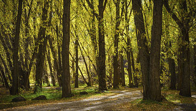 Photograph - Cottonwood Grove by TL  Mair