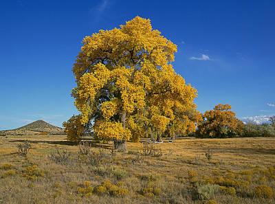 Santa Fe Photograph - Cottonwood II by Buddy Mays