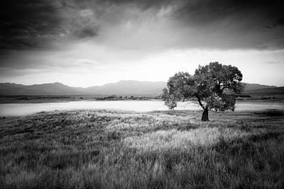 Photograph - Cottonwood In August by Alexander Kunz