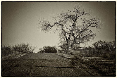 Photograph - Cottonwood by Jeanne Hoadley