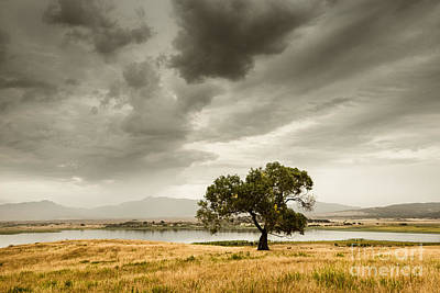 Photograph - Cottonwood Monsoon by Alexander Kunz