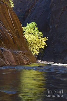 Photograph - Cottonwood On The Virgin River by Brian Boyle