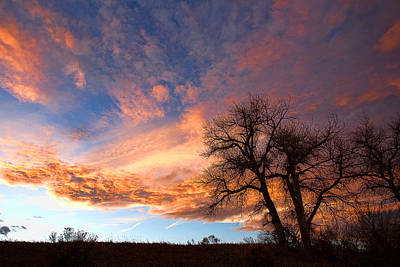 Peacock Feathers - Cottonwood Sky by Jim Garrison