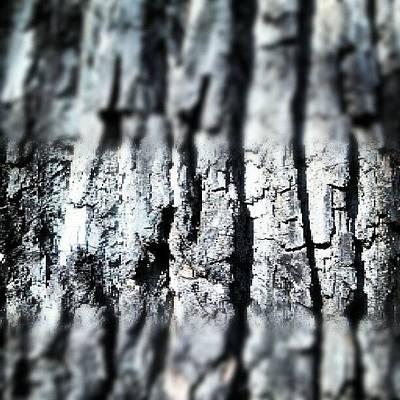 Skylines Wall Art - Photograph - Cottonwood Tree Bark by Genevieve Esson