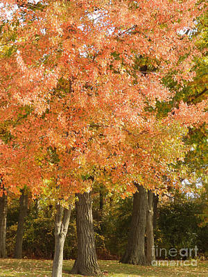 Photograph - Cottonwood Tree Fall Colors - M Landscapes Fall Collection No. Lf11 by Monica C Stovall