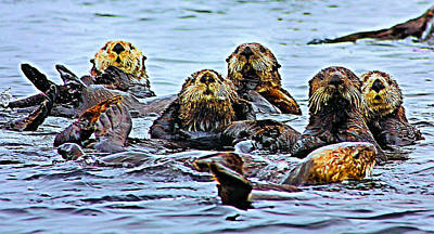 Otter Photograph - Couch Critters by Kristin Elmquist