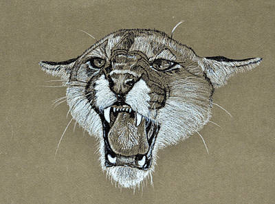 Mascot Drawing - Cougar 1 by David McDowell