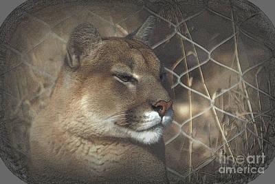 Photograph - Cougar As Art by Jim McCain