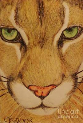 Cougar Art Print by Christy Saunders Church