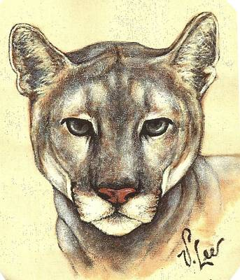 Painting - Cougar by VLee Watson