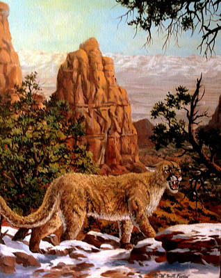 Painting - Cougar by W  Scott Fenton