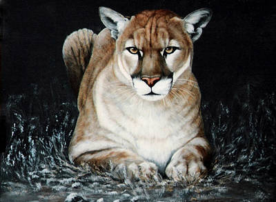 Cougar Waiting Art Print by DiDi Higginbotham