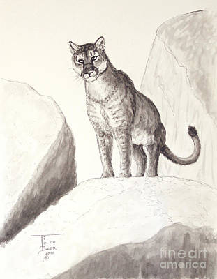 Lookout Mountain Drawing - Cougar's Gaze by Art By - Ti   Tolpo Bader