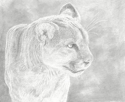 Cougars Gaze Art Print