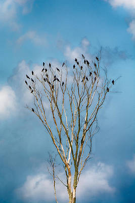 Photograph - Counting Crows by Guy Whiteley