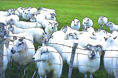 Photograph - Counting Sheep by Charlie Brock