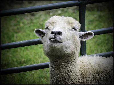 Photograph - Counting Sheep by LeeAnn McLaneGoetz McLaneGoetzStudioLLCcom