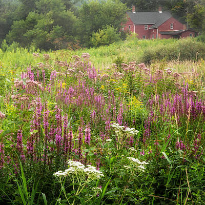Connecticut Landscape Photograph - Country Bouquet by Bill Wakeley