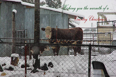 Photograph - Country Christmas by Robyn Stacey