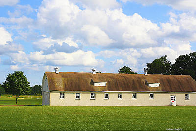 Photograph - Country Dreaming by Ann Murphy