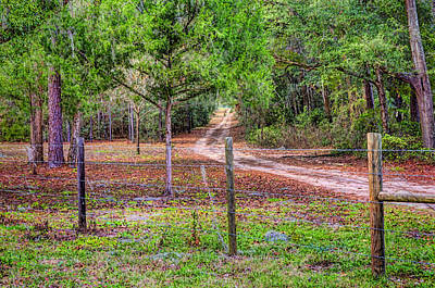 Photograph - Country Driveway by Lewis Mann