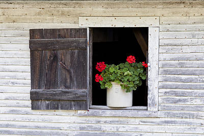 Photograph - Country Elegance by Alan L Graham