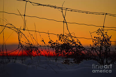 Photograph - Country Fence by Joshua McCullough