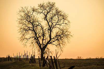 Country Fence Sunset Art Print