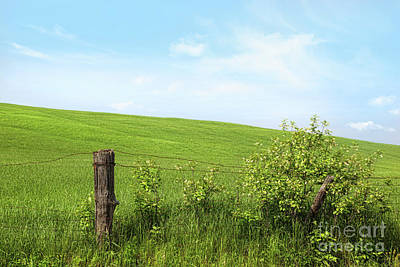 Country Fence With Flowers With Blue Sky Art Print by Sandra Cunningham