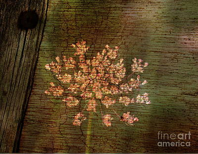 Photograph - Country Flower by Erica Hanel