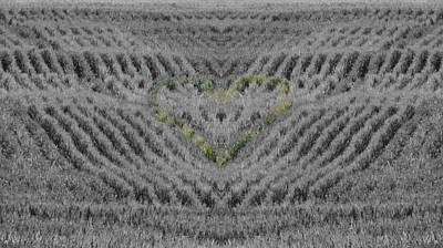 Cornfield Photograph - Country Heart by Dan Sproul