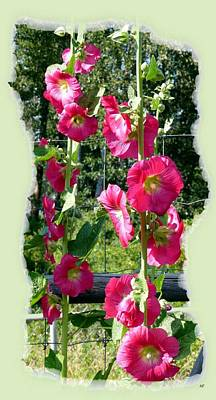 Photograph - Country Hollyhocks by Will Borden