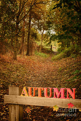 Country Lane In Autumn Art Print by Amanda Elwell