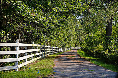 Photograph - Country Lane by Linda Brown