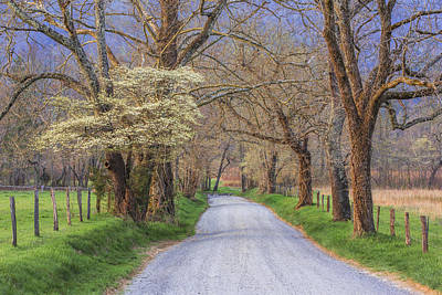 Dogwoods Photograph - Country Lane by Mike Lang