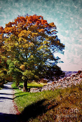 Painting - Country Lane by Shari Nees