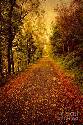 North Wales Photograph - Country Lane V2 by Adrian Evans